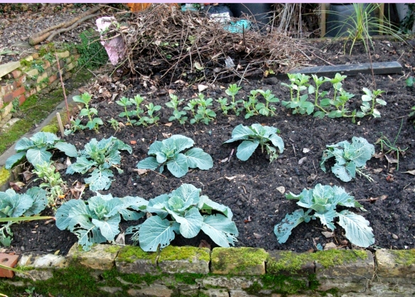 cabbage patches and all