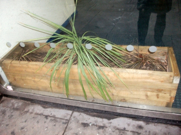 Pity the poor planter