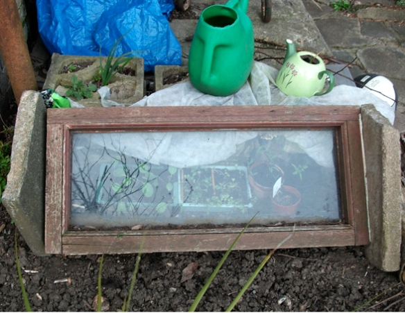 cheap and cheerful coldframe