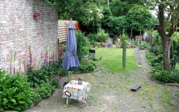 Foxgloves in da garden