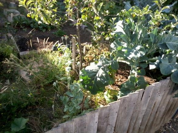 honour oak garden