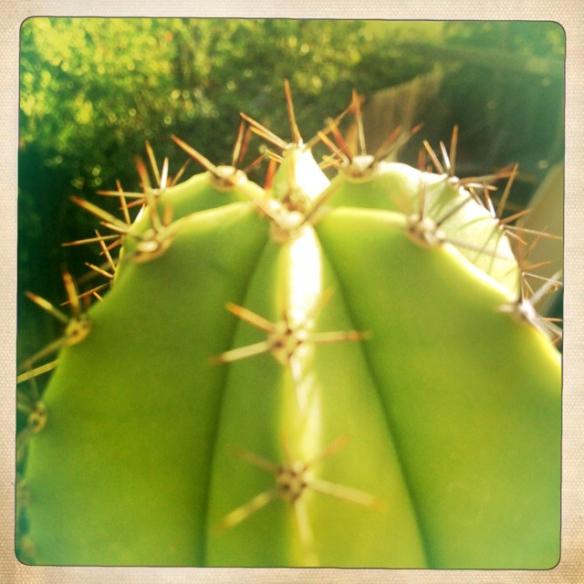 Cacti_NE_6
