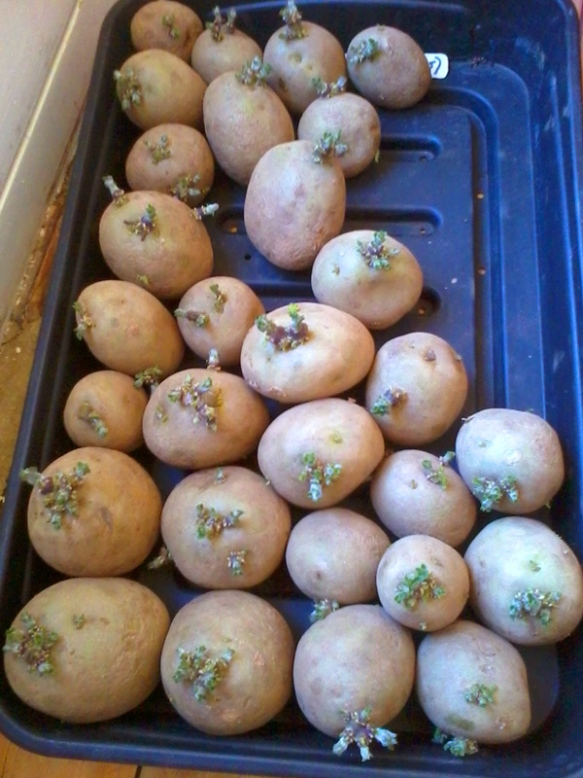 chitting time in 2014