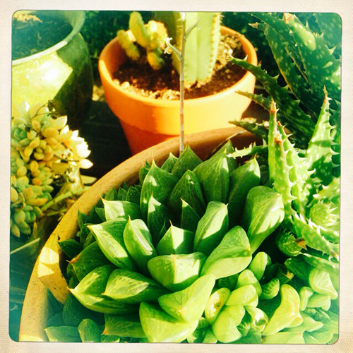 Nice cacti_NE_4