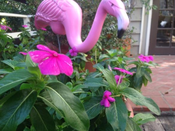 Pink flamingo_NE_2