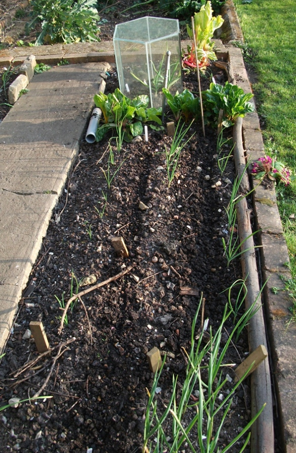 Veg Bed March 2014