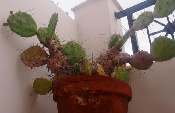Cactus_3