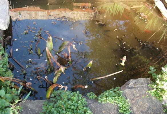 Pond before - murk