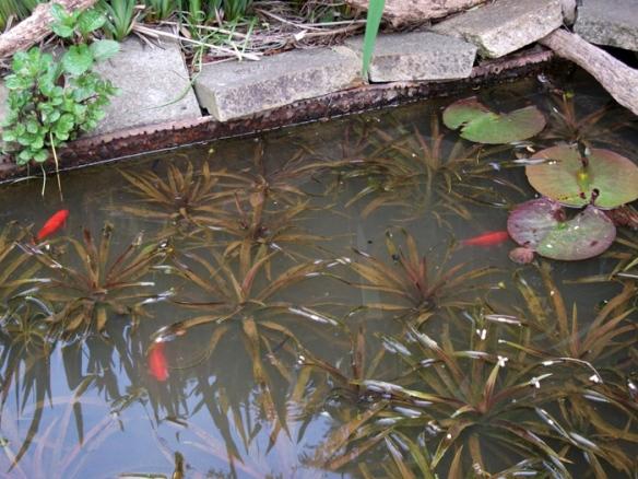 Pond after- kleer
