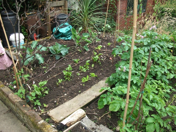 The lower veg bed