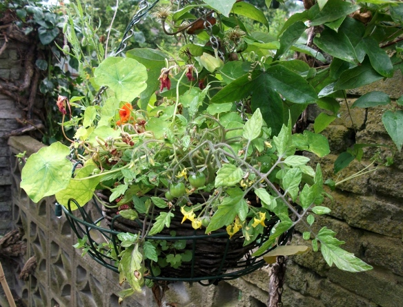 Hanging basket within a hanging basket