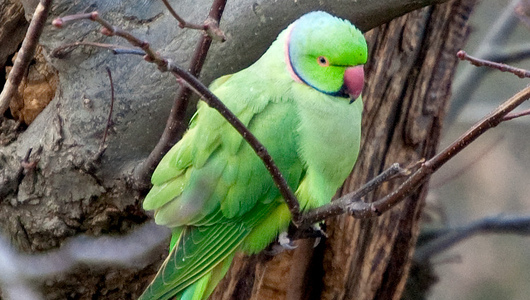 moody bird