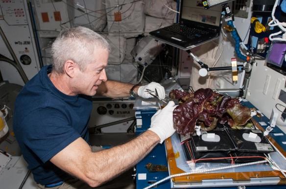 veg in space