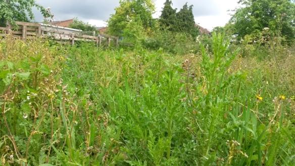 Green high weeds_Fliss