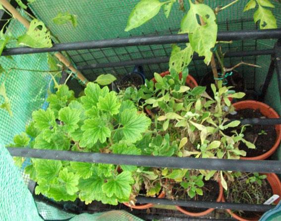 greenhouse tip