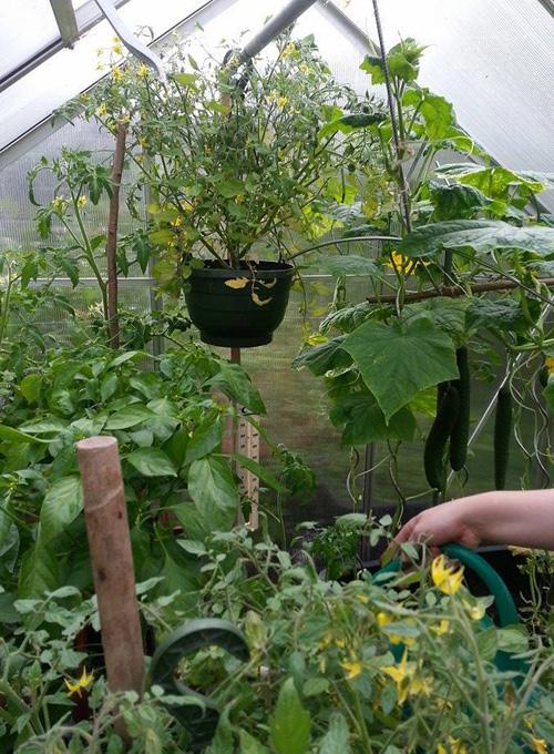 inside the greenhouse_jochen