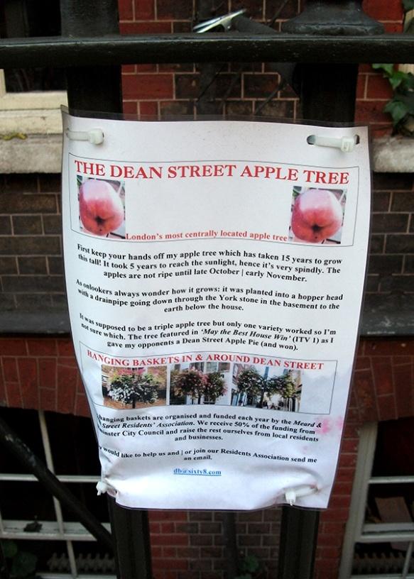 Apple Tree_1