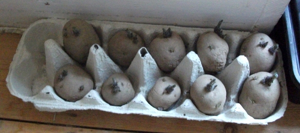 chitting march 2015