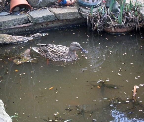 Duck Rock_3