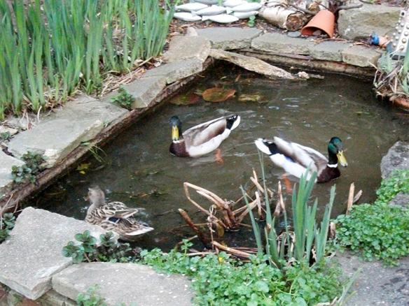 Duck update!
