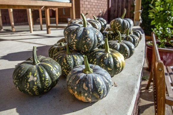 pumpkins in australia