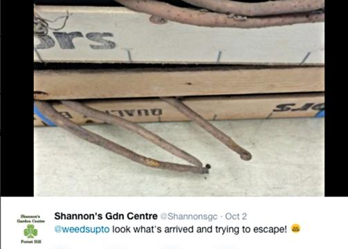Shannons tweet