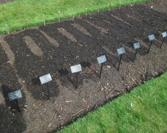 ocd veg beds