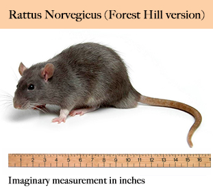 rat_large_resize